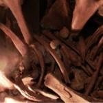 Кости мамонта. Зал геологии