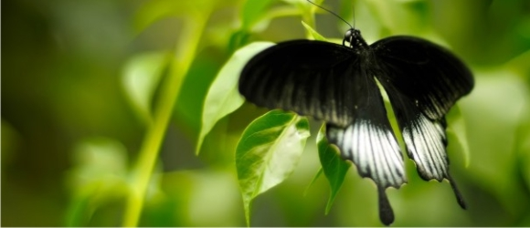 миниатюра бабочка