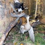 Большой-кроншнеп. Зал природы