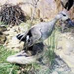 Серая-утка. Зал природы
