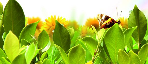 миниатюра живые бабочки